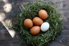 Αυγά στα αυγά κοτόπουλου φωλιών Φωλιά σε ένα ξύλινο υπόβαθρο Στοκ Φωτογραφία