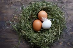 Αυγά στα αυγά κοτόπουλου φωλιών Φωλιά σε ένα ξύλινο υπόβαθρο Στοκ φωτογραφία με δικαίωμα ελεύθερης χρήσης