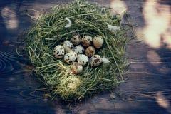 Αυγά στα αυγά ορτυκιών φωλιών Φωλιά σε ένα ξύλινο υπόβαθρο Στοκ Εικόνα