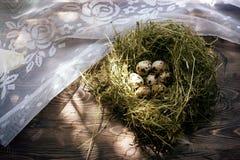 Αυγά στα αυγά ορτυκιών φωλιών Φωλιά σε ένα ξύλινο υπόβαθρο Στοκ Φωτογραφία