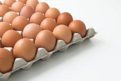 Αυγά στη συσκευασία χαρτοκιβωτίων Στοκ Εικόνα