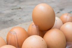 Αυγά στη συσκευασία Στοκ φωτογραφίες με δικαίωμα ελεύθερης χρήσης