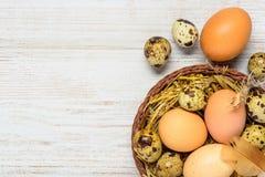 Αυγά στη φωλιά αχύρου στο διάστημα αντιγράφων Στοκ Φωτογραφία