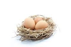 Αυγά στη φωλιά στοκ εικόνα με δικαίωμα ελεύθερης χρήσης