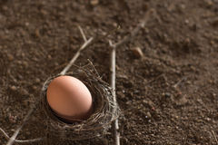 Αυγά στη φωλιά στοκ φωτογραφίες με δικαίωμα ελεύθερης χρήσης