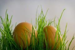 Αυγά στη χλόη με τον ήλιο Στοκ φωτογραφία με δικαίωμα ελεύθερης χρήσης