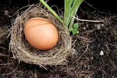Αυγά στις φωλιές που τοποθετούνται στο έδαφος. στοκ εικόνες