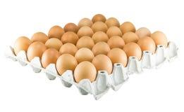 Αυγά στο δίσκο εγγράφου που απομονώνεται στο λευκό Στοκ Εικόνες