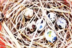 Αυγά στο υπόβαθρο αυγών Στοκ Εικόνες