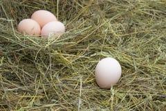 Αυγά στο φρέσκο αυγό φωλιών στη φωλιά στο αγρόκτημα στοκ εικόνες