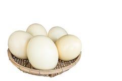 Αυγά στρουθοκαμήλων Στοκ εικόνες με δικαίωμα ελεύθερης χρήσης