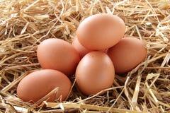 αυγά φρέσκα Στοκ φωτογραφία με δικαίωμα ελεύθερης χρήσης