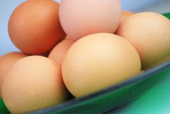 αυγά φρέσκα Στοκ Εικόνα