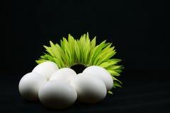 αυγά φρέσκα Στοκ Εικόνες