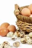 αυγά Στοκ εικόνες με δικαίωμα ελεύθερης χρήσης