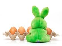 αυγά rubbit Στοκ φωτογραφίες με δικαίωμα ελεύθερης χρήσης