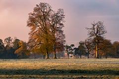 Αυγή φθινοπώρου στο αγγλικό πάρκο Στοκ Εικόνες