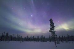 Αυγή Borealis, Raattama, 2014 02 21 - 33 Στοκ Φωτογραφίες