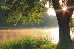 αυγή misty Στοκ φωτογραφίες με δικαίωμα ελεύθερης χρήσης