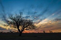 Αυγή Pampeano Calden Στοκ εικόνα με δικαίωμα ελεύθερης χρήσης