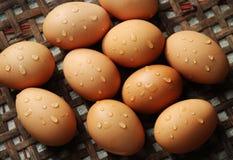 Αυγό από το κοτόπουλο Στοκ Φωτογραφία