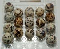 Αυγό, αυγά ορτυκιών Στοκ φωτογραφίες με δικαίωμα ελεύθερης χρήσης
