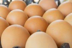 Αυγό, αυγό κοτόπουλου Στοκ φωτογραφία με δικαίωμα ελεύθερης χρήσης