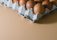 Αυγό, αυγό κοτόπουλου Στοκ Φωτογραφία