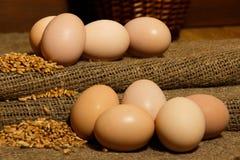 Αυγό, αυγό κοτόπουλου burlap Στοκ Εικόνα