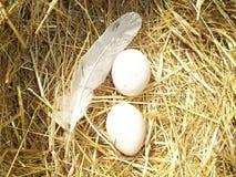 Αυγό και φτερό Στοκ Εικόνα