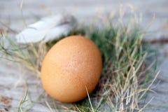 Αυγό κοτόπουλου στη φωλιά Στοκ Φωτογραφίες