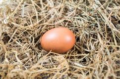 Αυγό κοτόπουλου Στοκ φωτογραφίες με δικαίωμα ελεύθερης χρήσης