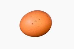 Αυγό κοτόπουλου Στοκ Εικόνες