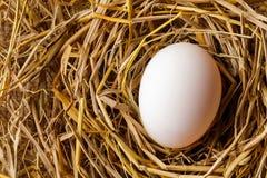 Αυγό κοτών ή παπιών στο άχυρο Στοκ εικόνα με δικαίωμα ελεύθερης χρήσης