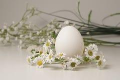 Αυγό κοτών ` s Στοκ εικόνες με δικαίωμα ελεύθερης χρήσης