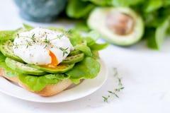Αυγό-λαθραίος με τα φύλλα μαρουλιού ciabatta, αβοκάντο και μωρών Στοκ εικόνες με δικαίωμα ελεύθερης χρήσης