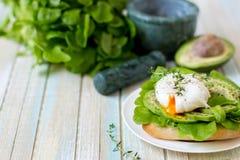 Αυγό-λαθραίος με τα φύλλα μαρουλιού ciabatta, αβοκάντο και μωρών Στοκ Φωτογραφίες