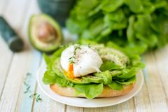 Αυγό-λαθραίος με τα φύλλα μαρουλιού ciabatta, αβοκάντο και μωρών Στοκ φωτογραφίες με δικαίωμα ελεύθερης χρήσης
