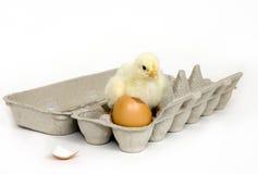 αυγό νεοσσών χαρτοκιβωτί Στοκ φωτογραφία με δικαίωμα ελεύθερης χρήσης