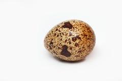 Αυγό ορτυκιών Στοκ εικόνα με δικαίωμα ελεύθερης χρήσης