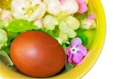 Αυγό Πάσχας, βιολέτες και άνθη της Apple Στοκ Φωτογραφίες