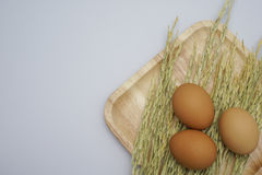 Αυγό στην άσπρη ανασκόπηση Στοκ φωτογραφίες με δικαίωμα ελεύθερης χρήσης