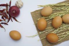 Αυγό στην άσπρη ανασκόπηση Στοκ Φωτογραφίες