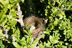 Αυγό στη φωλιά ενός μικρού πουλιού σε ένα δέντρο Στοκ φωτογραφία με δικαίωμα ελεύθερης χρήσης
