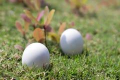 Αυγό στη χλόη της έννοιας Πάσχας Στοκ φωτογραφία με δικαίωμα ελεύθερης χρήσης