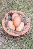 Αυγό στη χλόη Στοκ Φωτογραφία