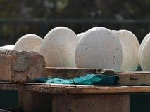 Αυγό στρουθοκαμήλων Στοκ Εικόνες
