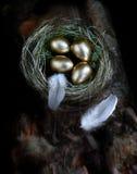 Αυγό συνταξιοδοτικών φωλιών Στοκ Φωτογραφίες