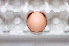 αυγό τελευταίο Στοκ Εικόνες