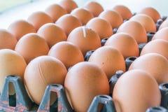 Αυγό του κοτόπουλου Στοκ εικόνα με δικαίωμα ελεύθερης χρήσης